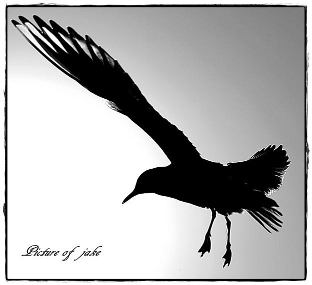 ~ 鳥 ~