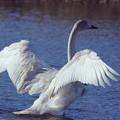Photos: 天使の翼