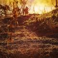 写真: 燃える朝靄