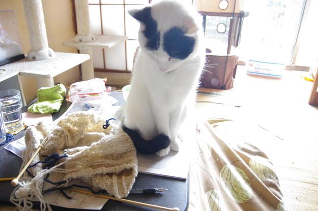 写真: 編み物よりご飯ください
