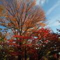 写真: 殿ヶ谷戸庭園にて1