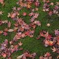 写真: 殿ヶ谷戸庭園にて2