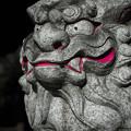 写真: 狛犬@浦和