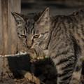 写真: 男前の猫2@八丁湖