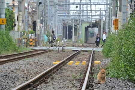 常磐貨物線/田端(信)-三河島