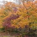 pz2057 苗木畑の紅葉