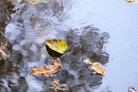 2014.11.19 瀬谷市民の森 源流に落葉