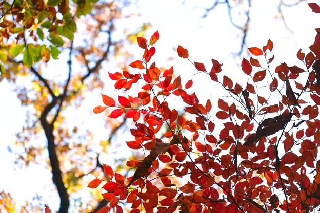 2014.12.08 瀬谷市民の森 散歩道 空色