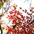 Photos: 2014.12.08 瀬谷市民の森 散歩道 空色
