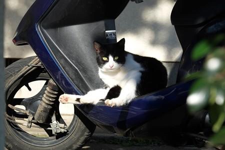 2014.12.08 追分市民の森 スクーターに猫