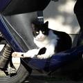 Photos: 2014.12.08 追分市民の森 スクーターに猫