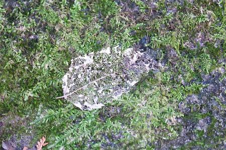 2014.12.23 瀬谷市民の森 消えゆく枯葉