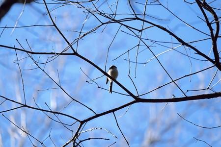 2015.01.09 瀬谷市民の森 枝に柄長の居る光景