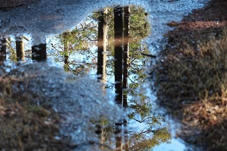 2015.01.23 追分市民の森 雨跡