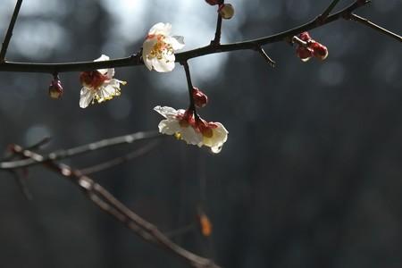 2015.02.23 瀬谷市民の森 梅 雨あがる