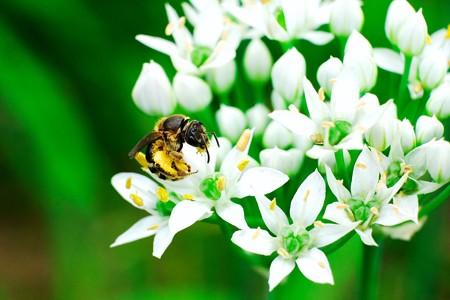 2017.08.24 追分市民の森 雄蘂でミツバチ