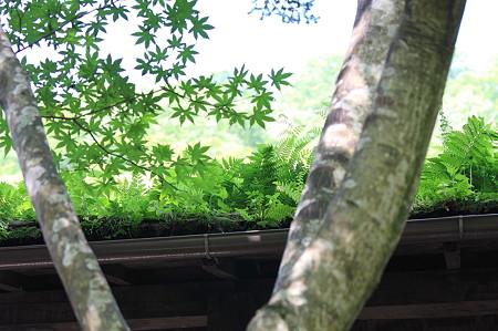 2010.08.17 法師温泉 夏の軒先