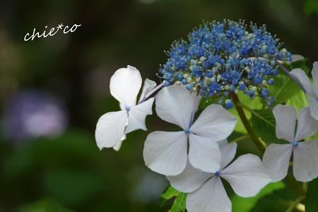 八景島-088