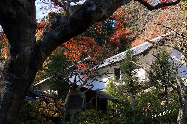 東慶寺-310