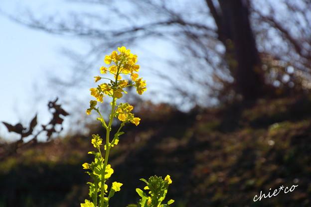 吾妻山公園-139