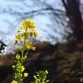 写真: 吾妻山公園-139