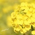 写真: 吾妻山公園-141