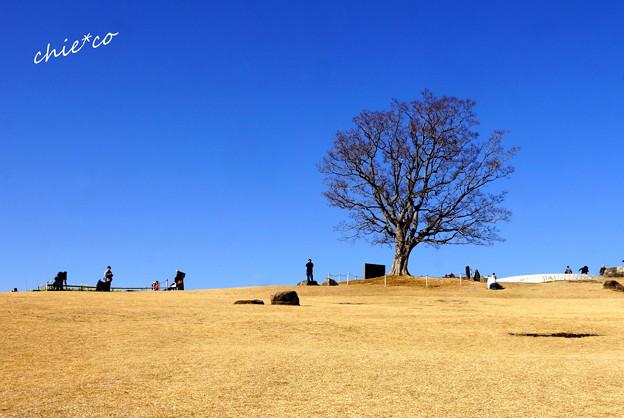 吾妻山公園-148
