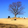 写真: 吾妻山公園-151
