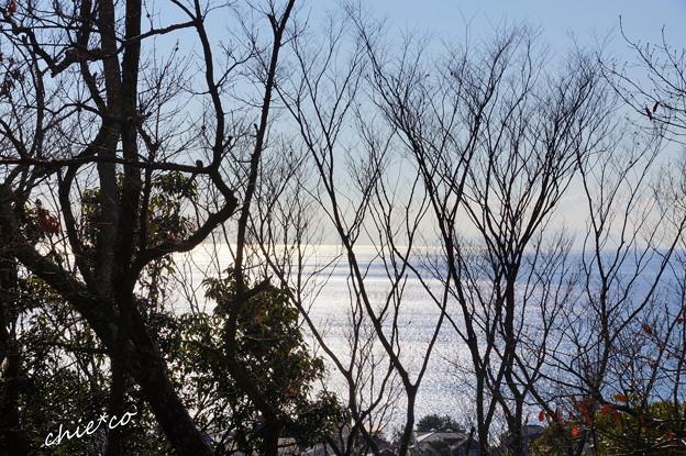 吾妻山公園-155