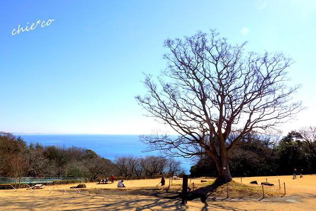 吾妻山公園-158