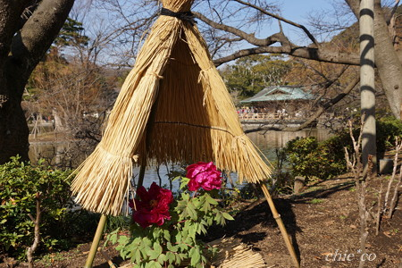 ぼたん庭園-063
