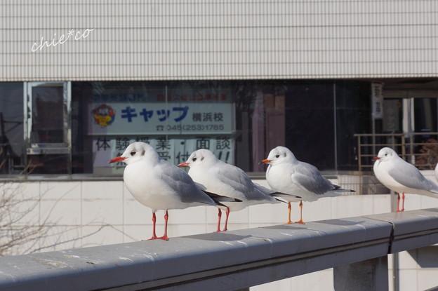 関内~野毛~吉田町さんぽ-122