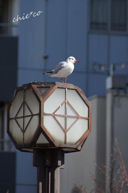 関内~野毛~吉田町さんぽ-134