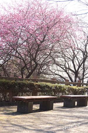 金沢自然公園-204