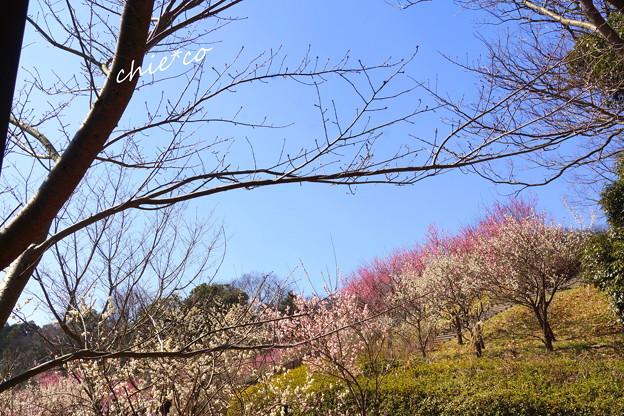 金沢自然公園-207