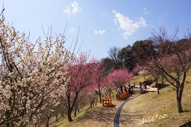 金沢自然公園-219