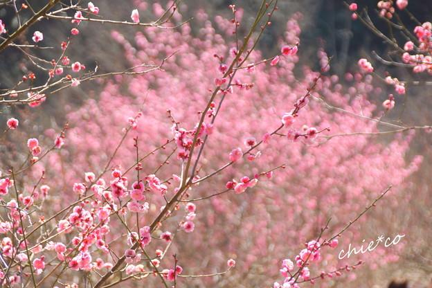 金沢自然公園-224