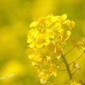 写真: 金沢自然公園-269