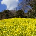 写真: 金沢自然公園-274