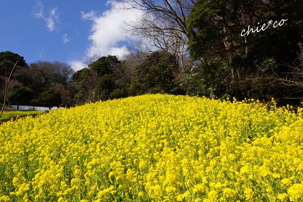 金沢自然公園-283