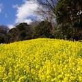 写真: 金沢自然公園-283