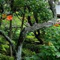 写真: 鎌倉-512