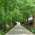 写真: 山手イタリア山庭園-266