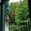 写真: 山手イタリア山庭園-305