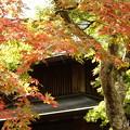 写真: 箱根美術館庭園-220