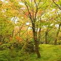 写真: 箱根美術館庭園-223