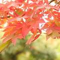 写真: 箱根美術館庭園-198