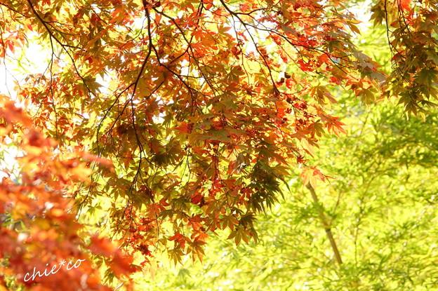 箱根美術館庭園-215