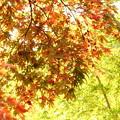 写真: 箱根美術館庭園-215