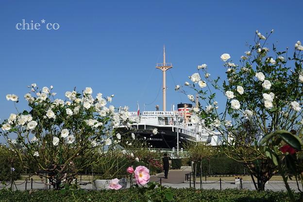Yokohama-248